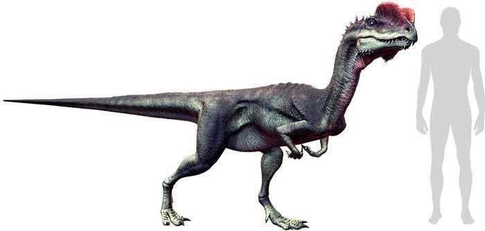 Dilophosaurus (Coelophysoidea). Por Herschel Hoffmeyer   Shutterstock.com