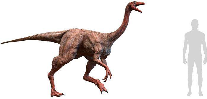 Struthiomimus (Ornithomimosauria). Por Herschel Hoffmeyer   Shutterstock.com