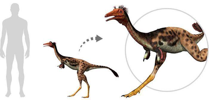 Mononykus (Alvarezsauroidea). Por Linda Bucklin   Shutterstock.com
