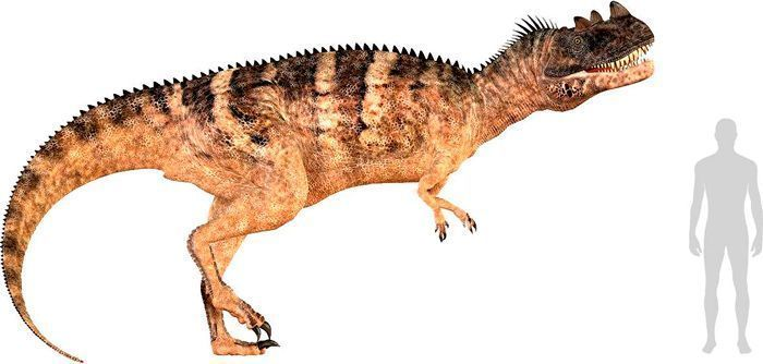Ceratosaurus (Ceratosauria). Por Catmando   Shutterstock.com