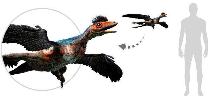 Microraptor (Deinonychosauria). Por Warpaint   Shutterstock.com