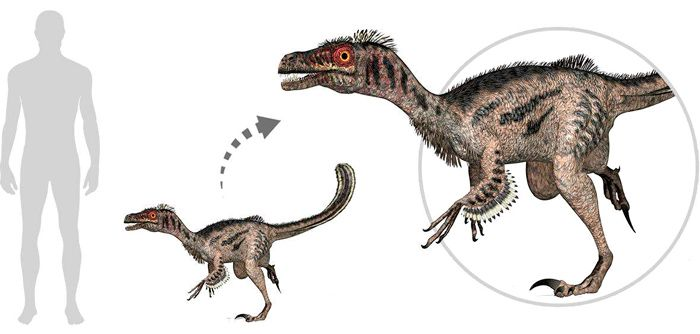 Velociraptor (Deinonychosauria). Por Linda Bucklin   Shutterstock.com