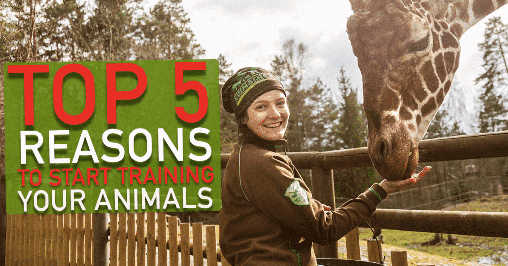 Top 5 reasons why you should start training your animals!