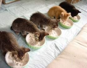 Можно ли стерилизовать кошку если она не рожала