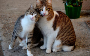 گربه یک گربه در خیابان پیدا کرد