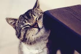 Почему кошки трутся мордой о ноги человека и углы