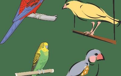 Beställningslista fåglar