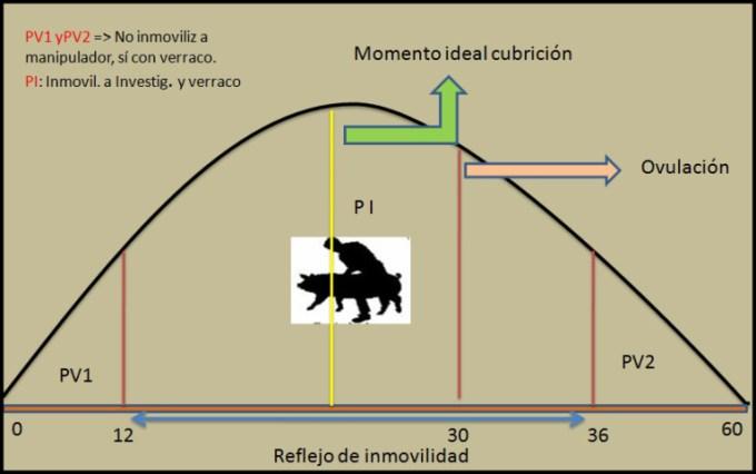 Inseminación en cerdos