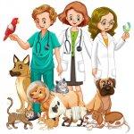 Curiosidades de la veterinaria