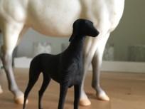 saluki-dog_003