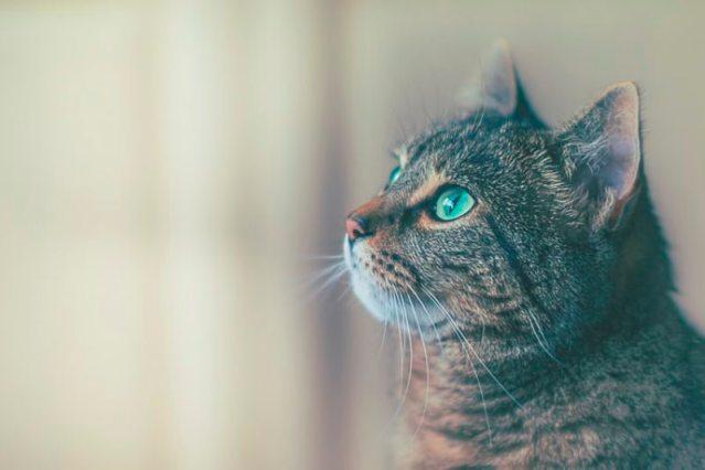 Cara Memilih Makanan Kucing yang Terbaik