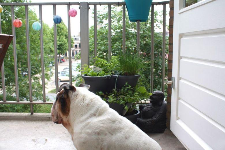 Bink op balkon