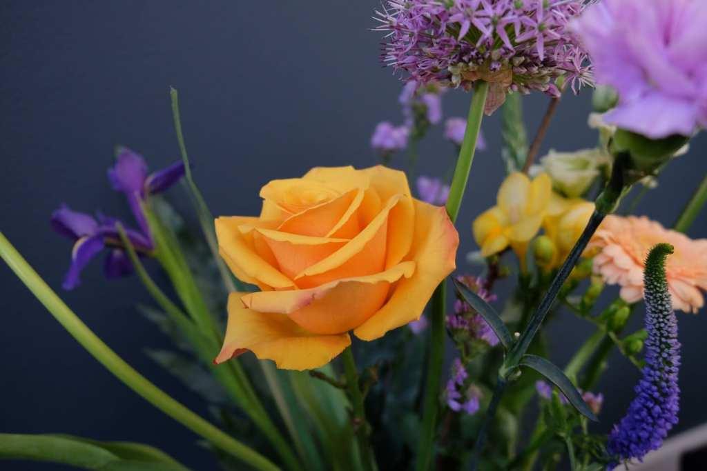 bloomon roos