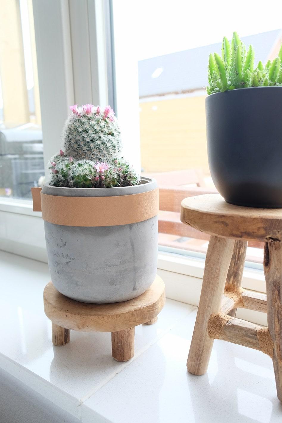 cactus met bloemen