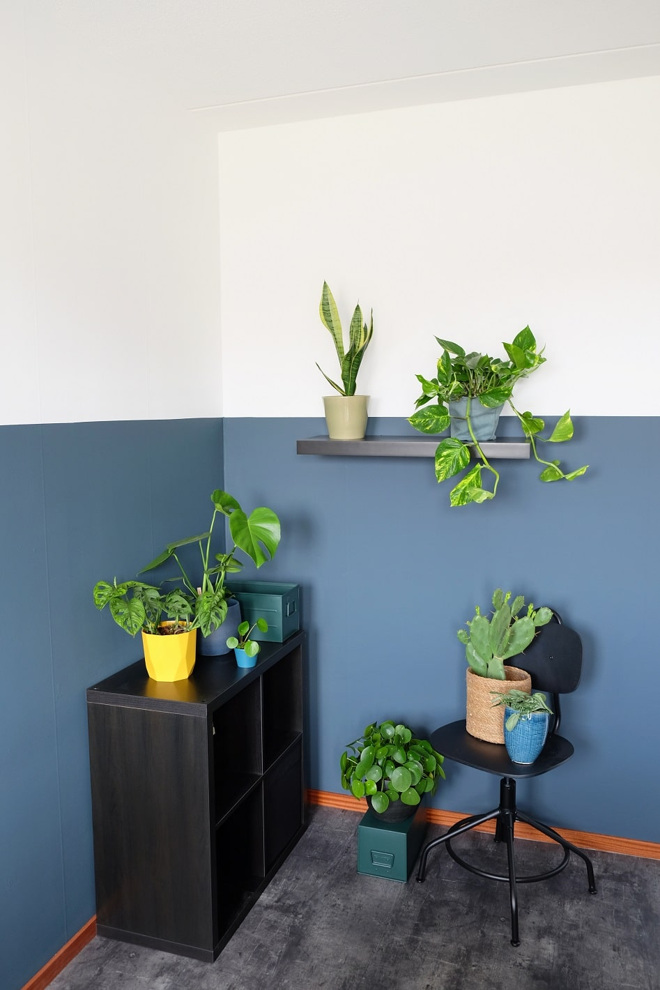 5 makkelijke kamerplanten