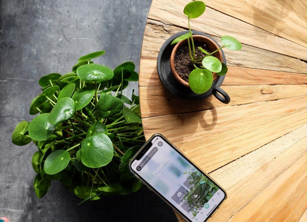 Planten app PictureThis