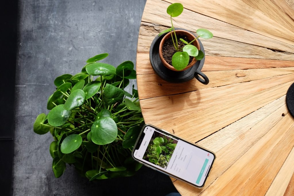 planten herkennen