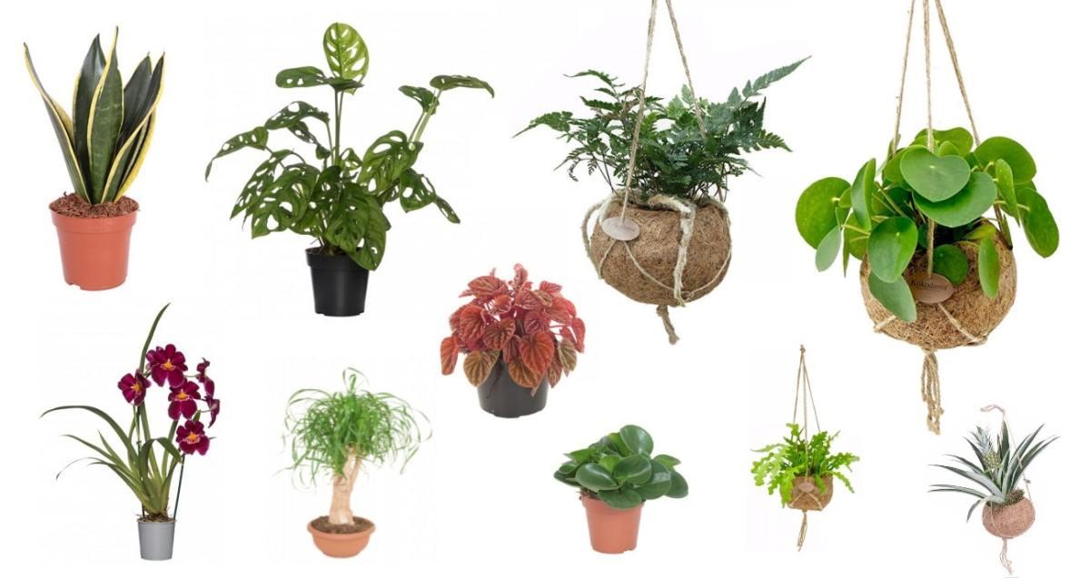 plant cadeau