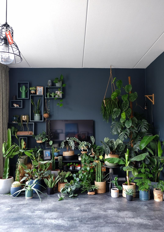 planten online