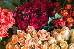 Rosenpracht im Kühlhaus