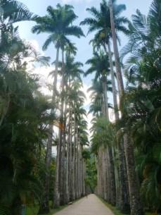 Ogród Botaniczny, Rio de Janeiro