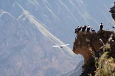 Kanion Colca Peru (3)