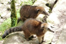 valle-de-cocora-koati