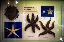 Muzeum reginalne - rozgwiazdy