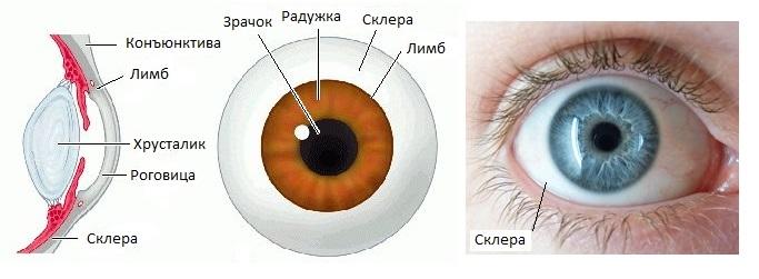 Разминка для глаз во время работы. Что такое склеры глаз или белочная оболочка? Синдром