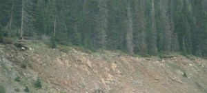 Тонкий шар ґрунту (і дерева) виникли на осадових породах на Середньому Заході США як свідчення того, що ці осадові породи утворилисяпевний час тому назад