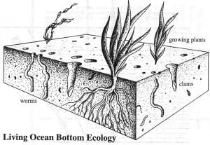 Життя на дні неглибоких морів через досить короткий проміжок часу красномовно проявить себе. Це називається біотурбацією