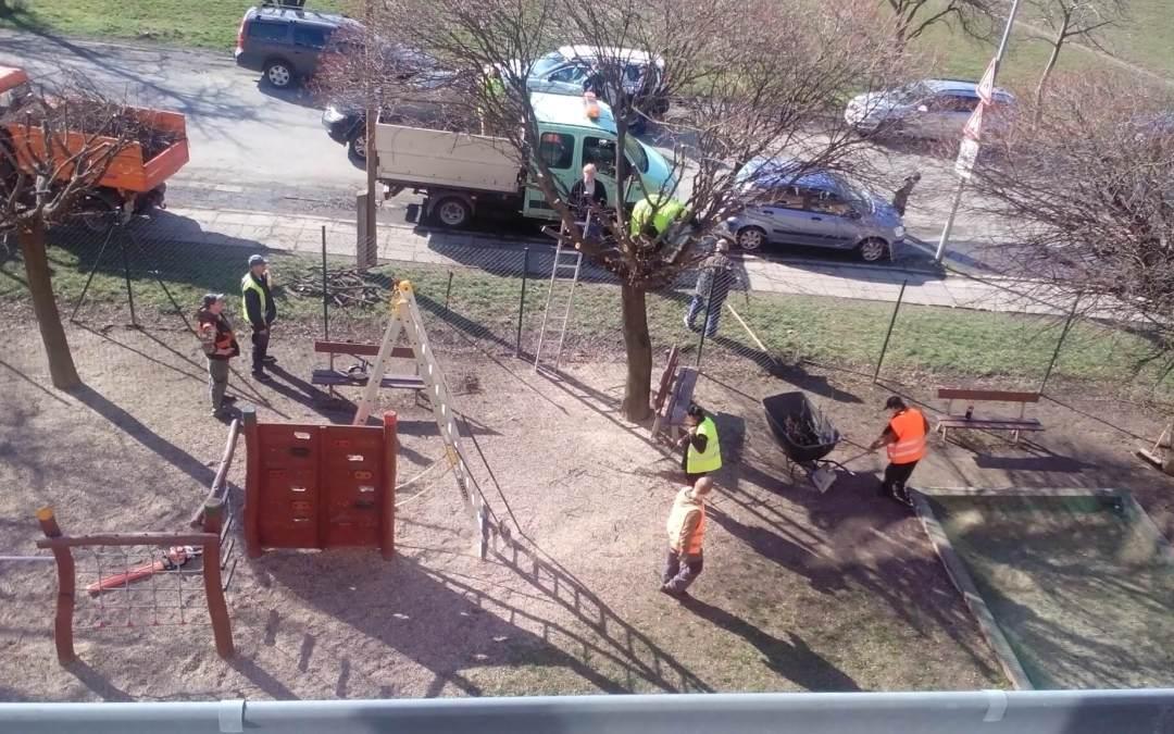 Jarní prořezávání stromů