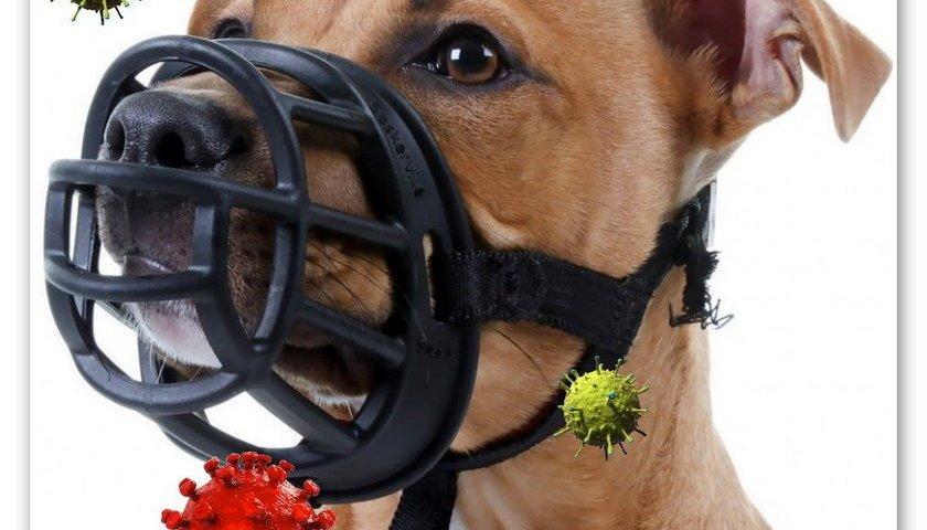 Намордник - эффективная защита от коронавируса или элемент биотерроризма? | Блог З.С.В. Свобода слова