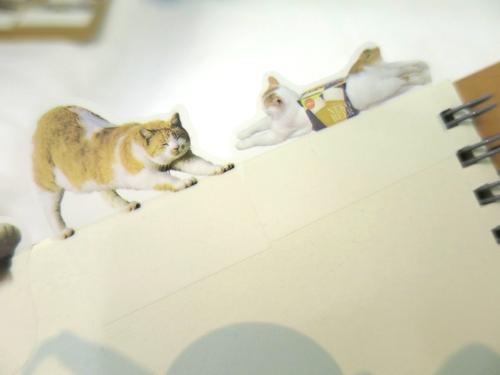 cat_tag16