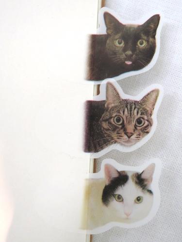 cat_tag3