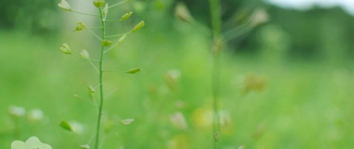 Zufallsmomente im September mit Saisonkalender und Ringana-Testbericht