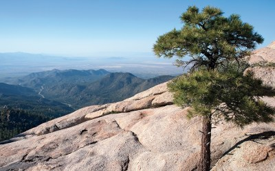Spending a Day at Hualapai Mountain Park You Won't Want to Say Goodbye to Hualapai!