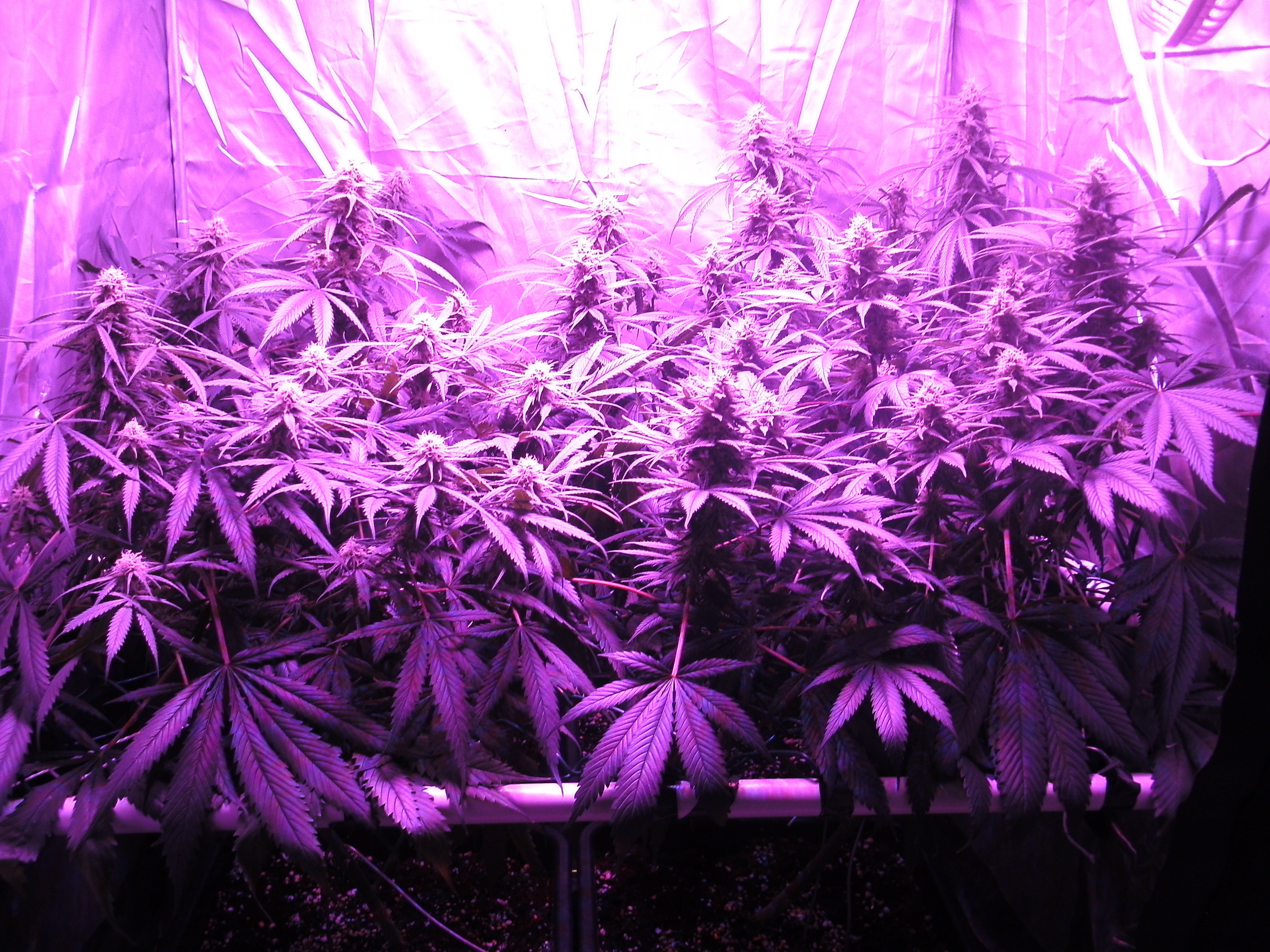 Choix Panneaux LEDs Page 4 Clairage CannaWeed