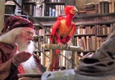 fumseck dumbledore