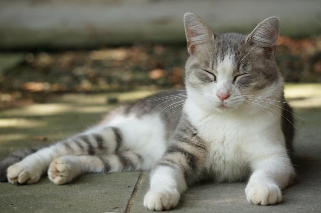 猫の里親募集のサイトを見ると譲渡会があるけど条件が厳しいねえ