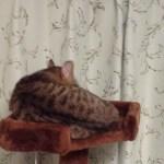 猫は叱ると拗ねるもの?嫌われたり怯えたりするから注意が必要