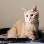 猫を飼うっていうことはトイレが情報収集になるけど一人暮らしだと
