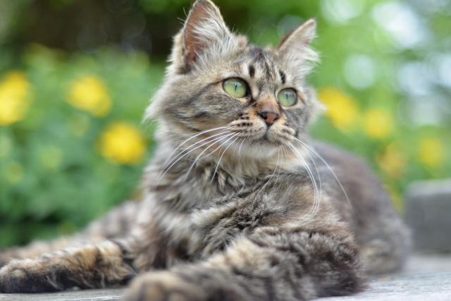 猫保護のボランティアがついに?ふるさと納税とか援助とかって?