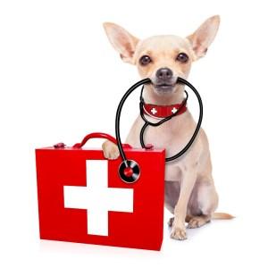 veterinarijos vaistine