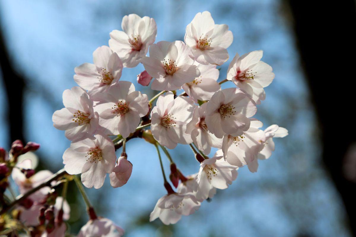 逗子のオススメお花見スポット① 高台から海の眺望と桜を同時に楽しめる「披露山公園」
