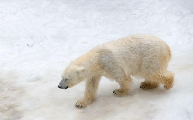 地球温暖化がもたらす悲劇
