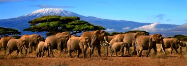 sumendiak-Kilimanjaro
