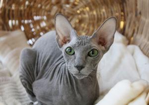 Voľne rozmrazené mačičkám veľmi chutí : kuracie –najmä prsia, hovädzie.