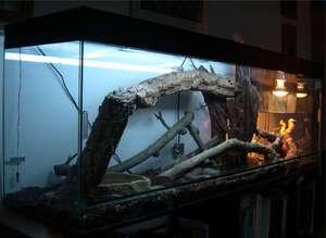 samostoyatelno-vypolnennyi-terrarium.jpg