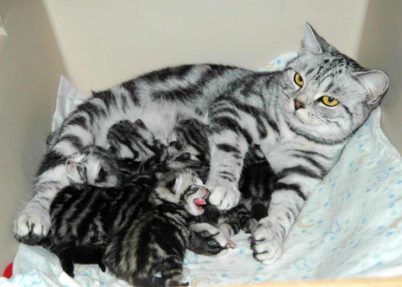 У кошки кровянистые выделения что делать. Кровотечение у беременной кошки: что делать